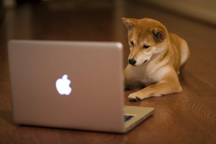 Perro akita con una Mac en el piso