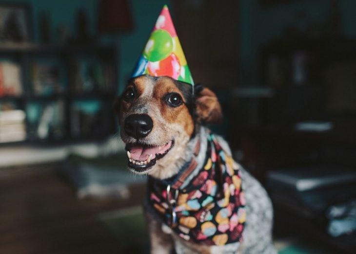 perro celebrando su cumpleaños