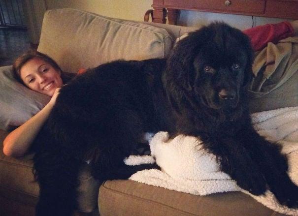 perro negro grande acostado en el sofá junto a su dueña