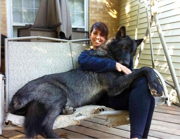 perro negro junto a su duela sentados en un sofá colgante
