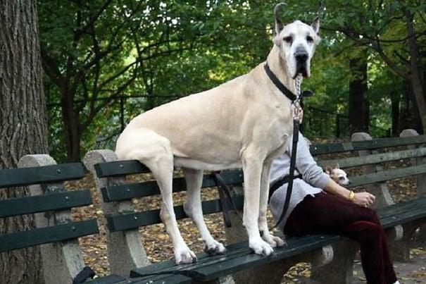 perro gran danes sentado en la banca de un parque