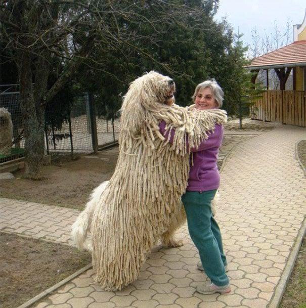 perro de cabello largo abrazando a su dueña mientras esta parado en dos patas