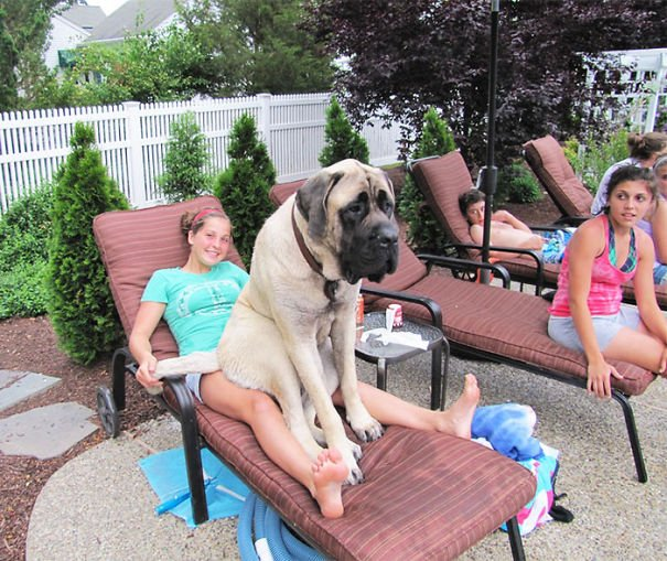 perro sentado en una silla de playa junto a su dueña