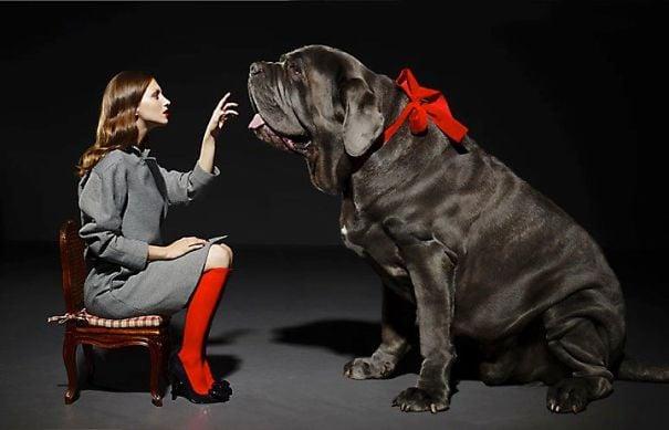 mujer sentada mientras señala a un enorme perro negro con un moño rojo