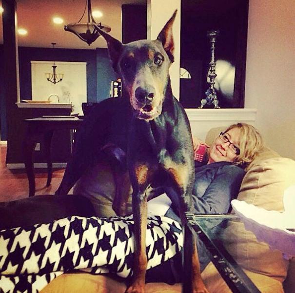 perro de color negro atravesando el cuerpo de su dueña mientras esta acostada