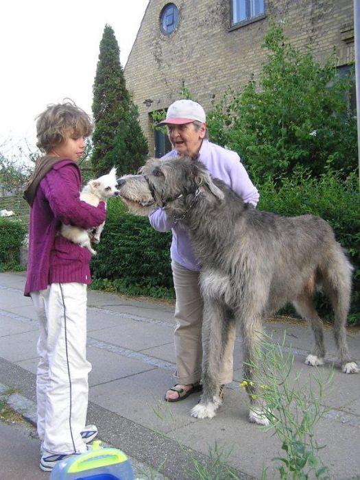 perros enormes (40)