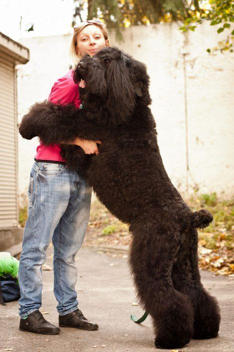perro enorme negro parado en dos patas abrazando a su dueña