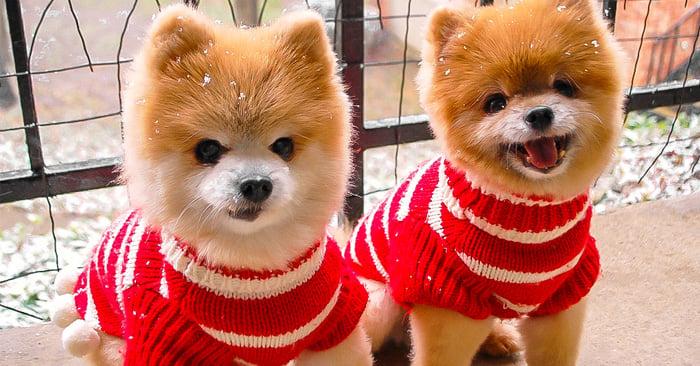 10 Señales de que eres una persona LOCA por los perros ¡Y estás orgullosa de ello!