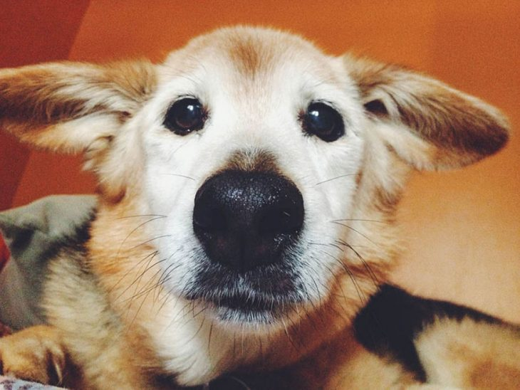 Perro tomándose un selfie