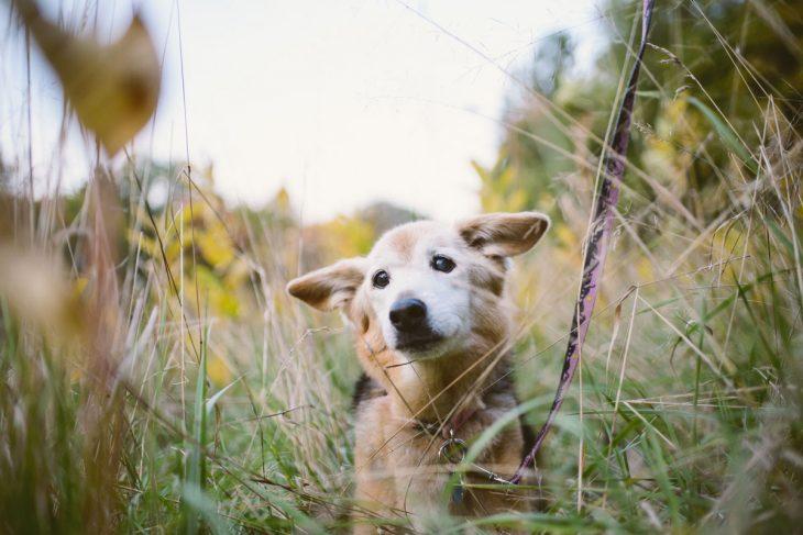 Perro con mirada triste en el pasto