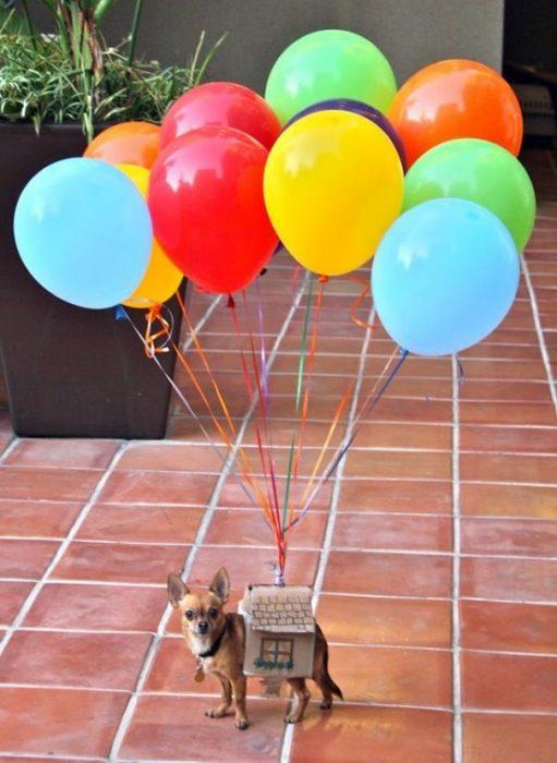 Perros disfrazados (14)