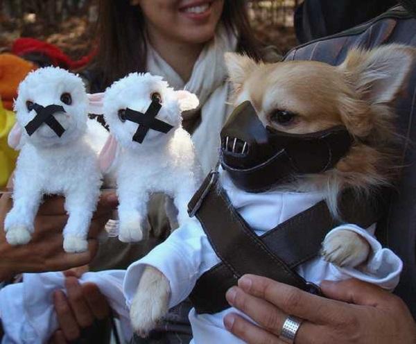 Perros disfrazados (18)