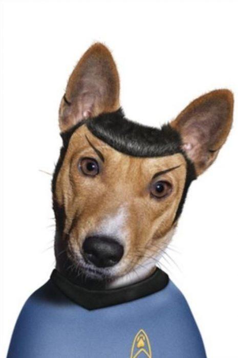 Perros disfrazados (19)