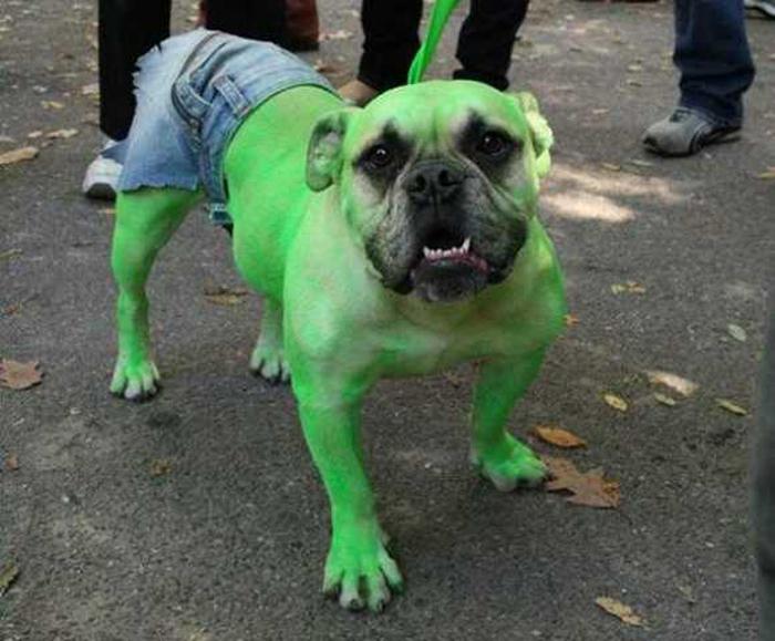 Perros disfrazados (20)