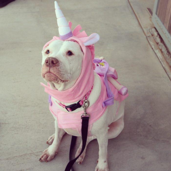Perros disfrazados (23)
