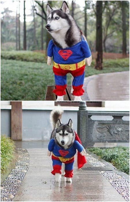 Perros disfrazados (24)