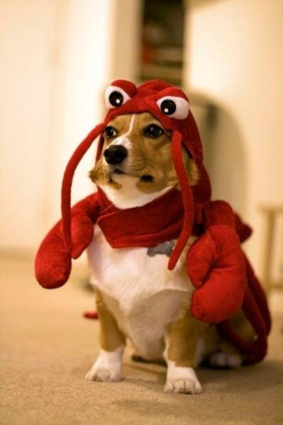 Perros disfrazados (28)