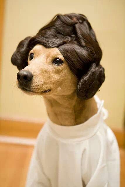 Perros disfrazados (29)