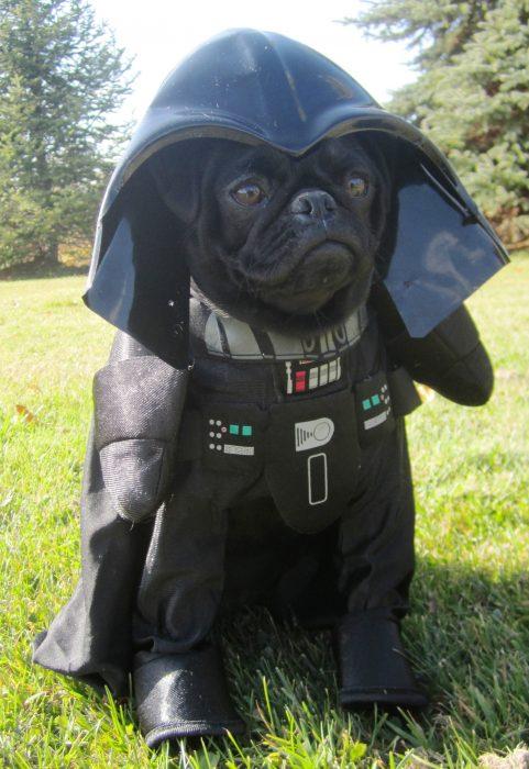 Perros disfrazados (31)