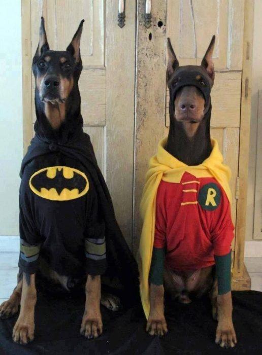 Perros disfrazados (4)