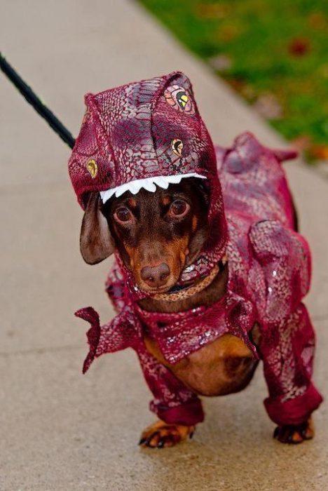 Perros disfrazados (5)