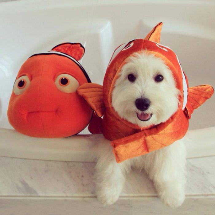 Perros disfrazados (6)