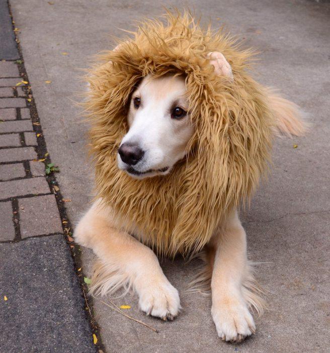 Perros disfrazados (8)