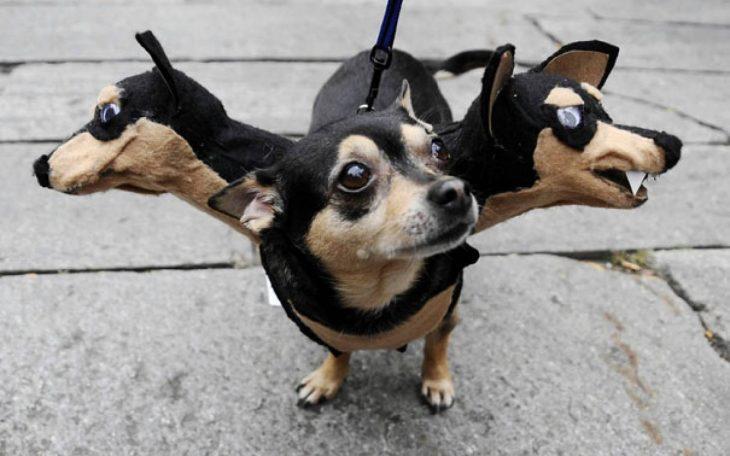 Perros disfrazados (9)