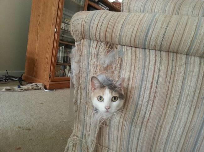 gato asomando la cabeza entre el sofá