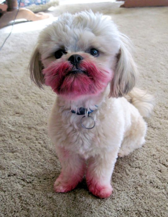 perro con la boca llena de labial rojo