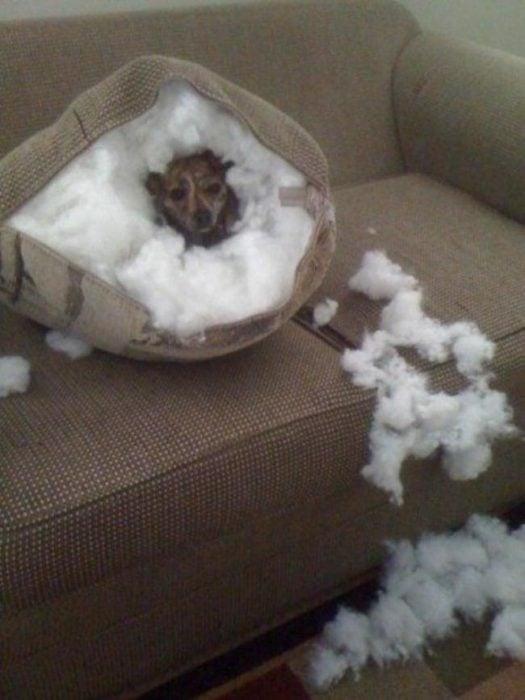 perro dentro de una almohada