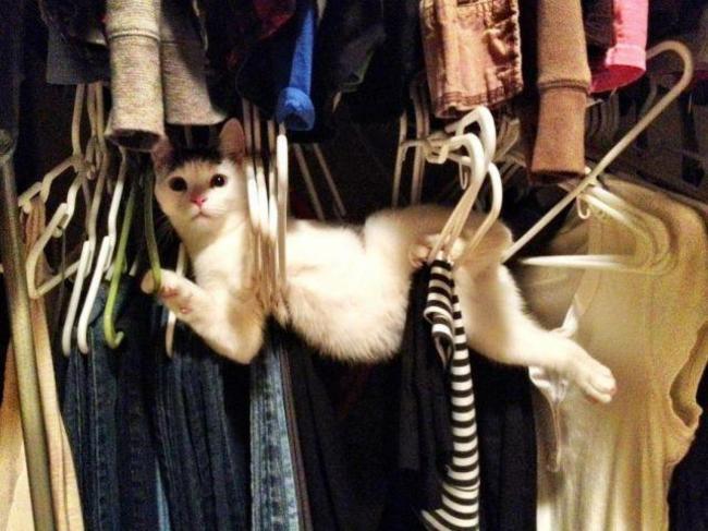 gato atrapado en los ganchos de la ropa