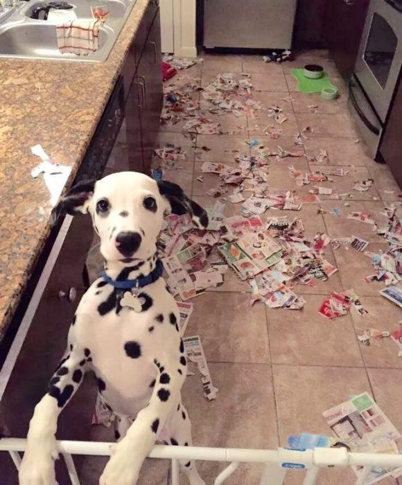 perro destruyendo una revista