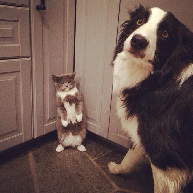 perro acorralando a un gato en la cocina