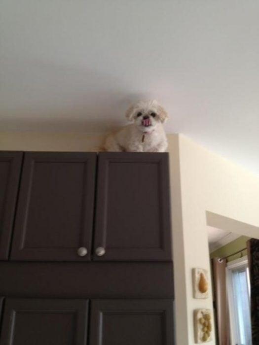 perro sobre la alacena