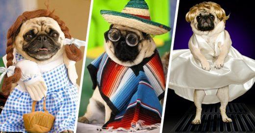30 Encantadores perritos que saben cómo lucir su disfraz