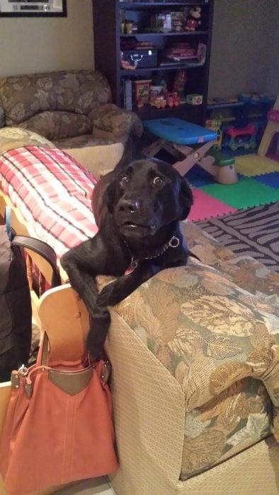 perro intentando sacar dinero de una bolsa
