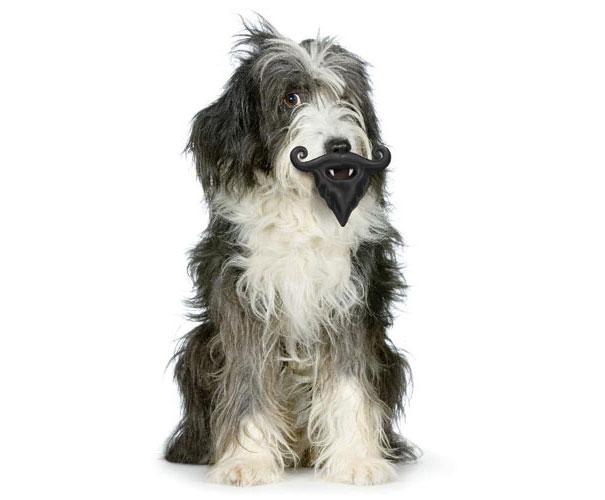 perro con un juguete en forma de bigote y barba