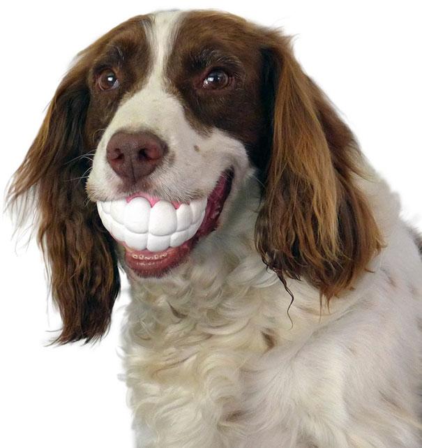 perro con unos dientes en una pelota
