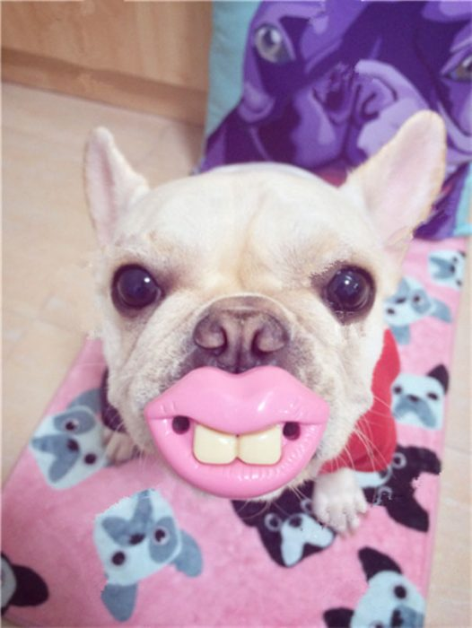 perro con unos labios y dientes en la boca