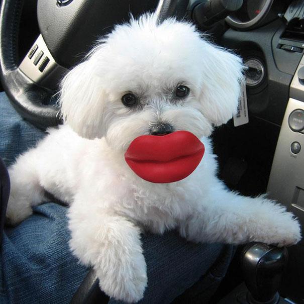 perro con unos labios de juguete