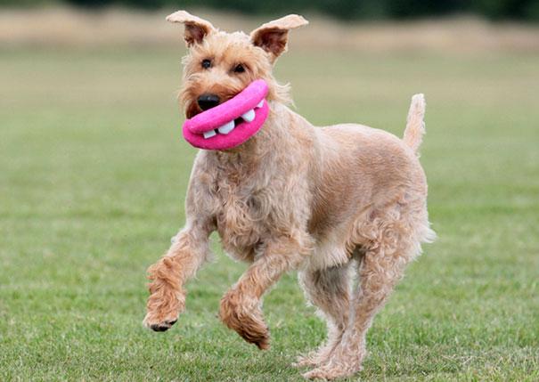 perro con un juguete en el hocico