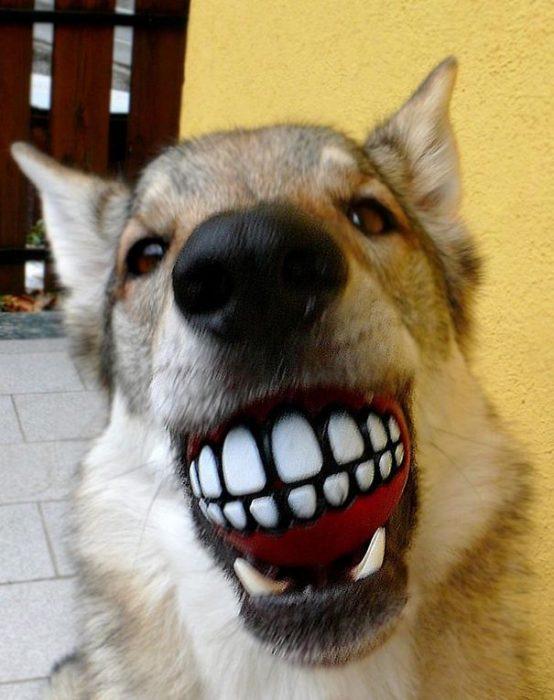 perro con una pelota en la boca