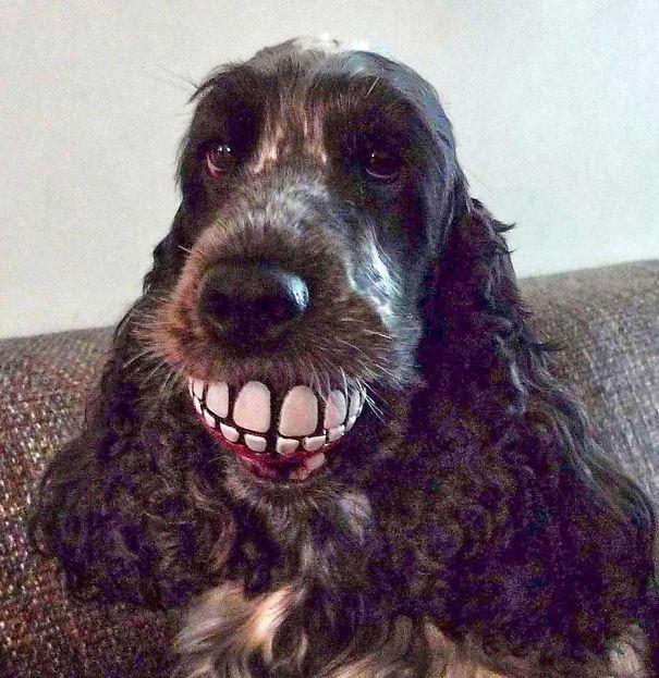 perro con unos dientes de juguete en el hocico