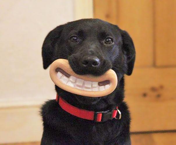 perro negro con una boca de plástico que es su juguete