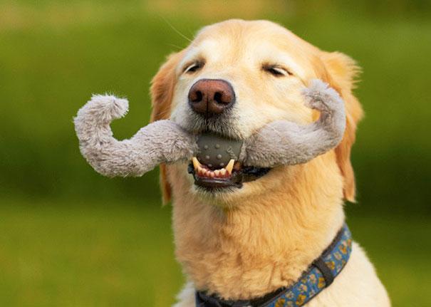 perro con unos bigotes de mordedera