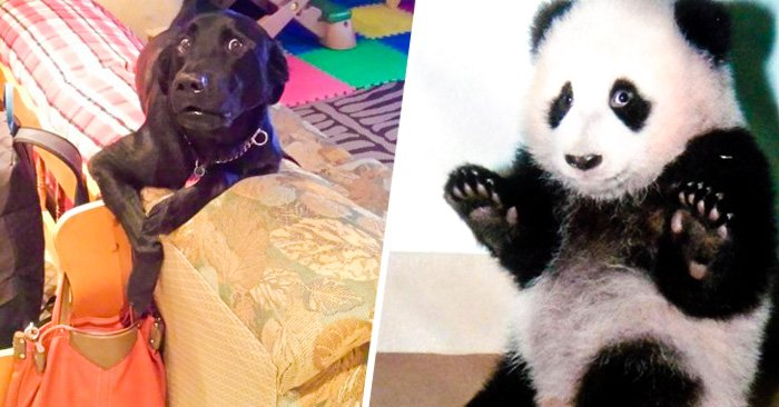 32 mascotas totalmente culpables que juran que NO es lo que parece