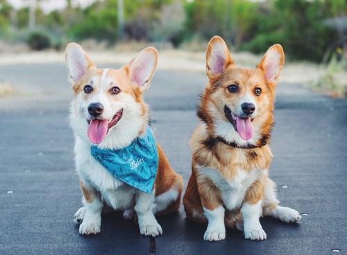 Cosas debes saber de una chica que ama a los perros (27)