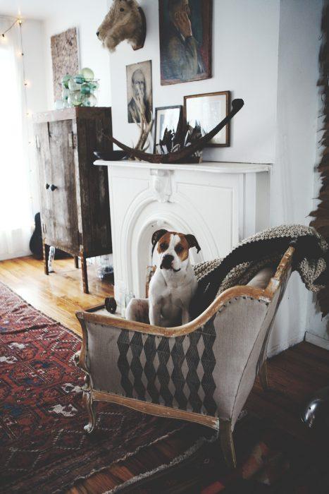 Perro en un sofá con cobija