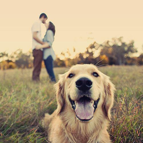 Perro entrometido en una foto de pareja
